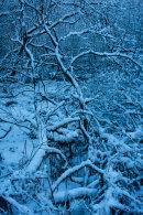 Winter Blues, Hazelhurst Wood