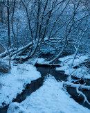 Winter, Hazelhurst Wood 05