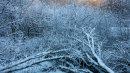 Winter, Hazelhurst Wood 08