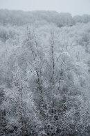 Winter Woodland, 01