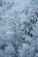 Winter Woodland, 02