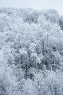 Winter Woodland, 04