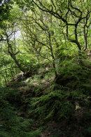 Woodland, Delph Brook