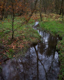 Woodland Stream, Roddlesworth