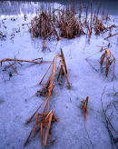 Icy Reeds, Mere Sands Wood