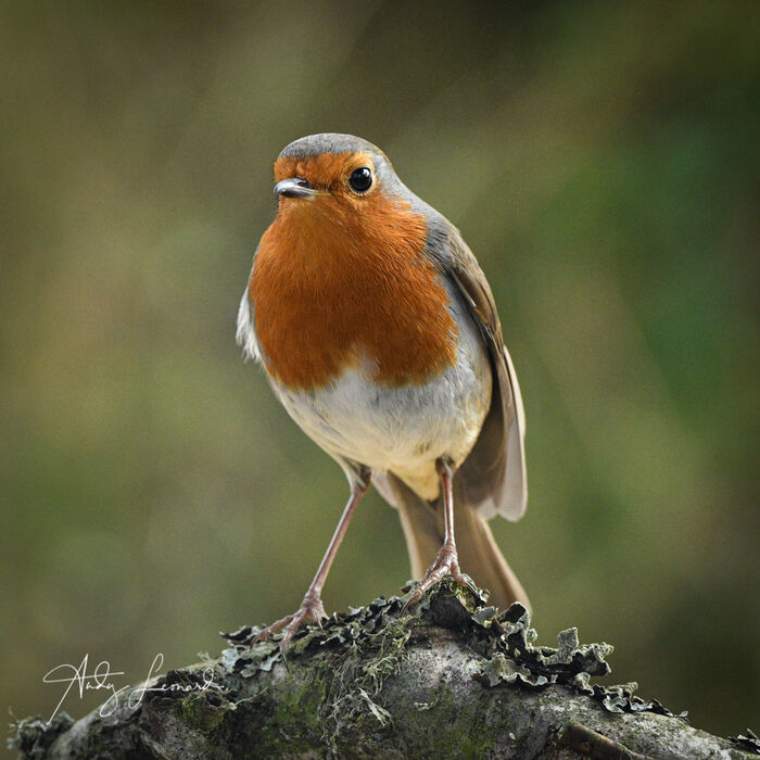Robin - well turned out for Spring