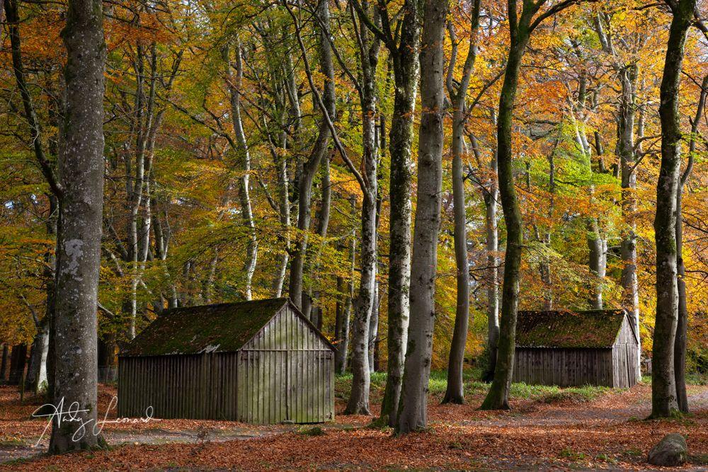Edzell Woods