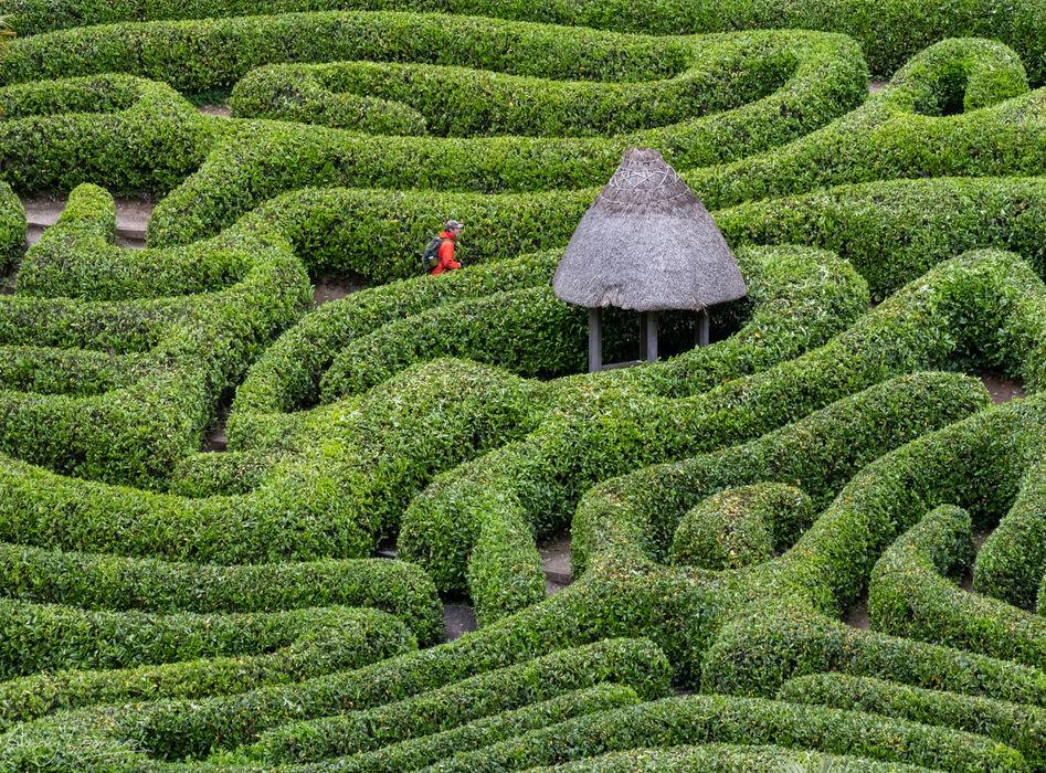 Glendurgan garden, Cornwall