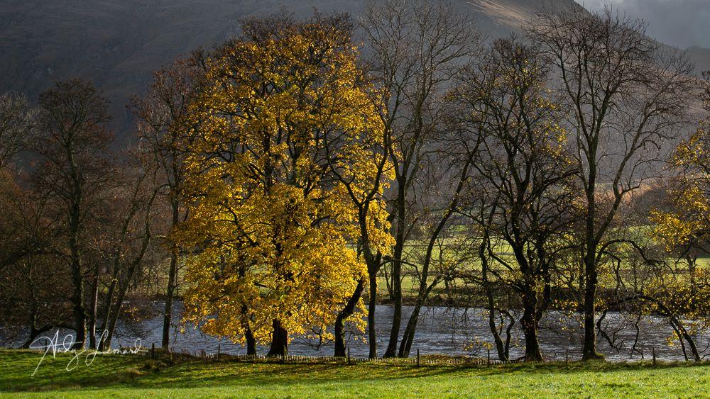 The last colours of autumn, Glen Lyon