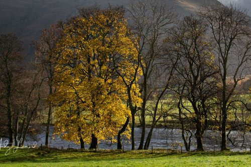 The last colours of autumn, Glen Lyon