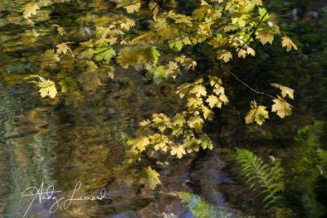 autumn -10
