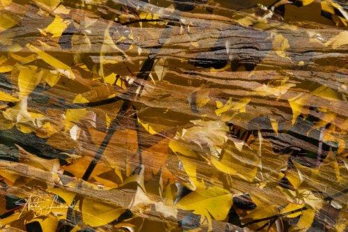 autumn -11