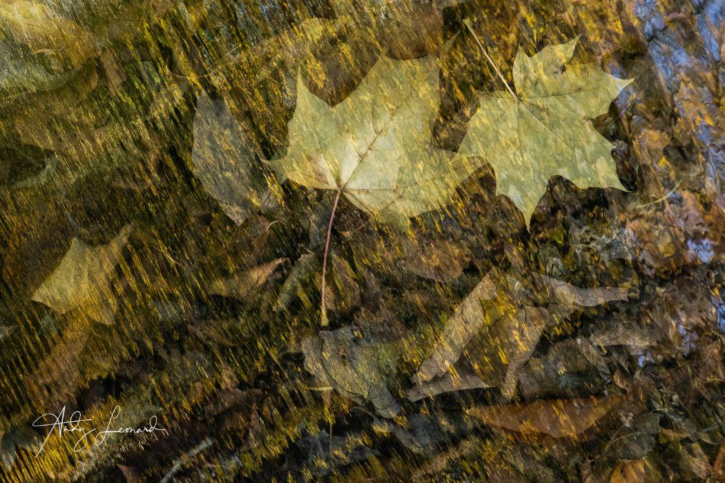 autumn -2