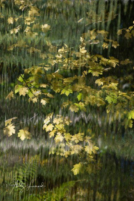 autumn -3