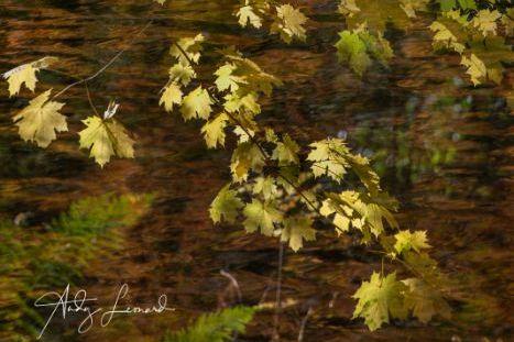 autumn -6