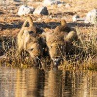 Baboons-Chobe River-Botswana (1 of 1)