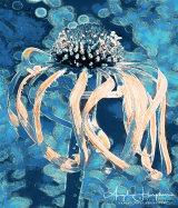 Echinacea Turquoise
