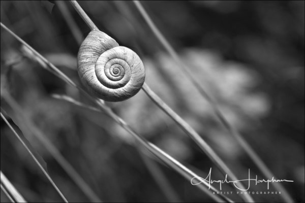 Normandy France Snail