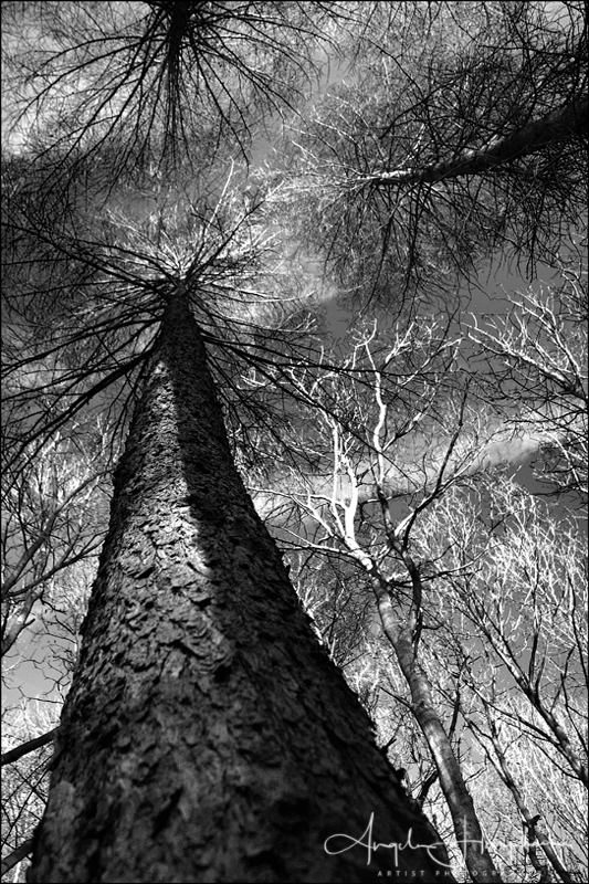 Gillfield Woods Mono Photo