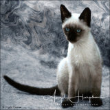 Greek Cat Photograph