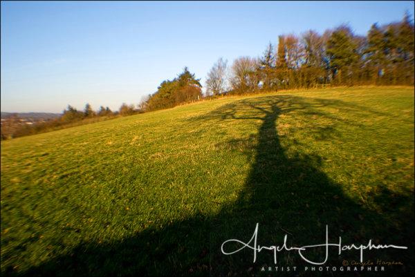 Tree Shadow Favourite Walk