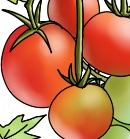 Grow your own tasty tomatoes