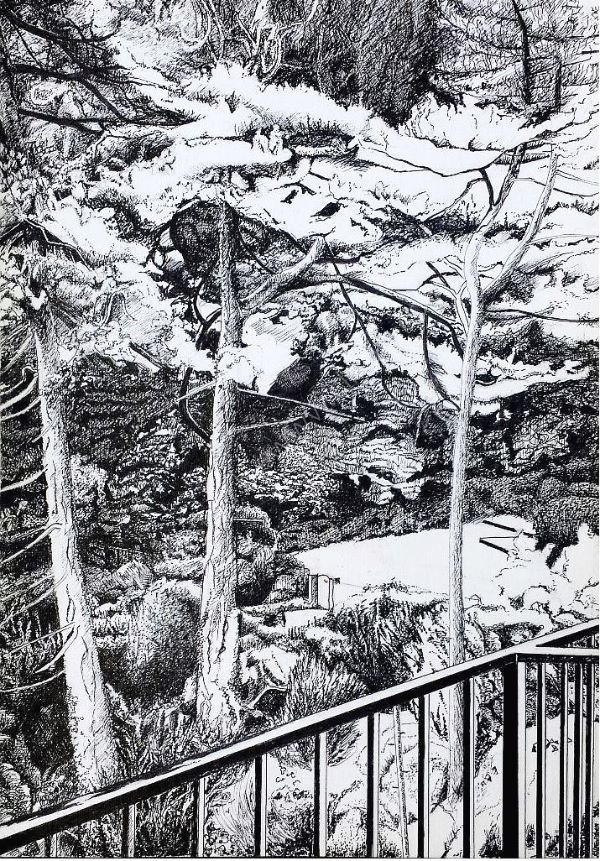 Pine Trees at Caswelll Bay
