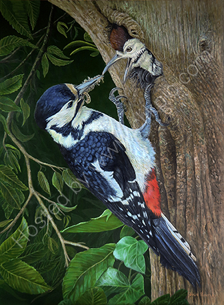 'Great Spotted Woodpecker'