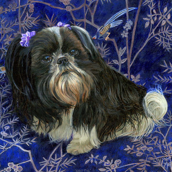 A portrait of a black and white shih tzu on a Chinese fabric background