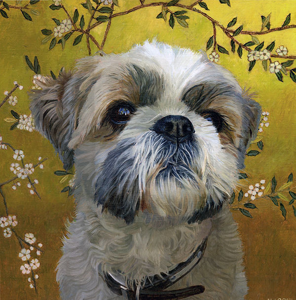 A portrait of a brown and white shhi tzu on a background of Chinese wallpaper