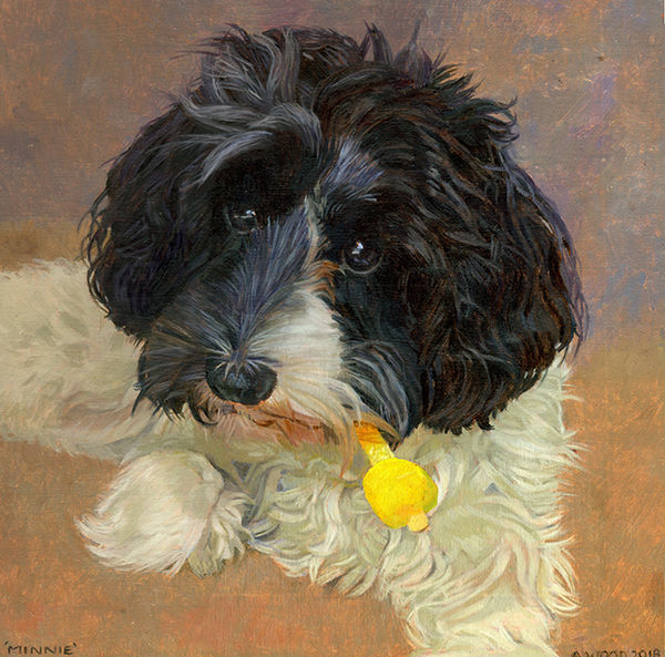 A portrait of a cockapoo holding an ice lolly