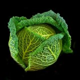 MARCH - 'FOOD' -  Brian Grimwood - Mike's Magnificent Cabbage - 1st
