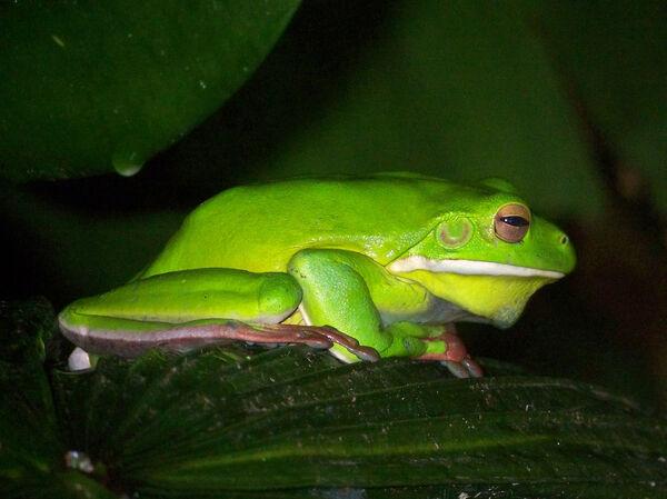 Ellie Enking -  Green frog - Joint 2nd