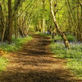 Mike Hubbard - Springtime in the Copse - 3rd