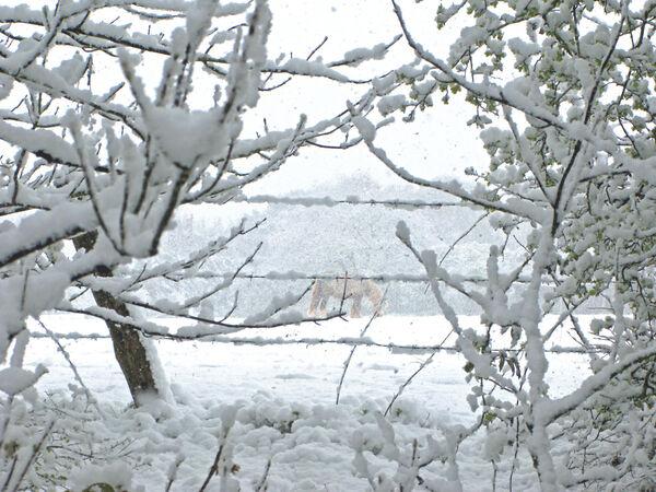 Norman Hadley - Snow Horse