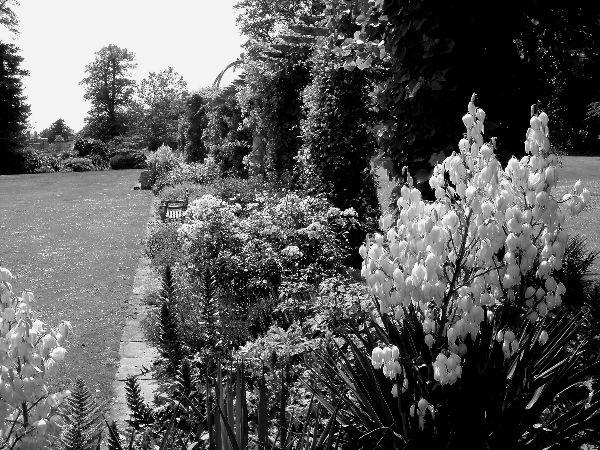 Peter Dunlop - West Dean Gardens