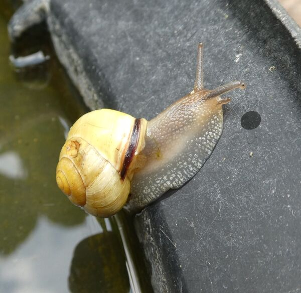 Richard Perry - Snail on Bird Batch