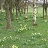 Spring at West Dean