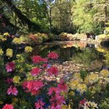 Tody Gardens, Norfolk
