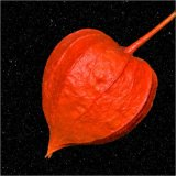 Chinese Lantern Against the Night Sky