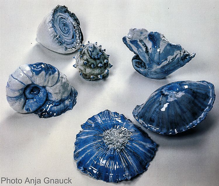 Shells in Porcelain
