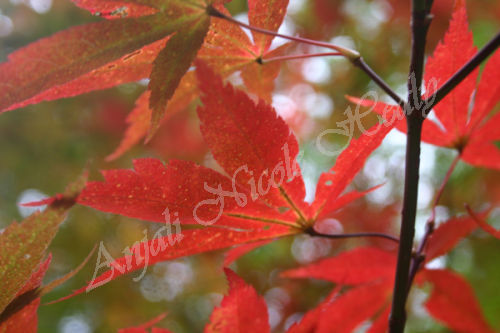 Autumn-Sparkles
