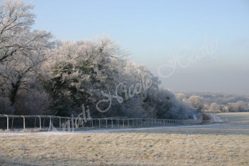 Frosted Gallops to Langley Vale