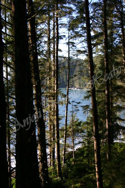 China Beach Through the Trees
