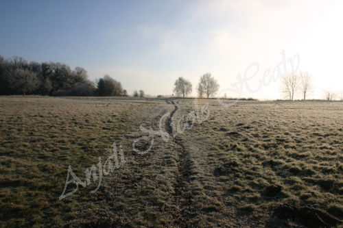 Frosted Path