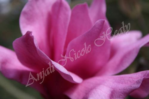 Full Magnolia Crown