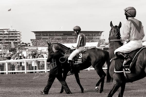 DERBY WINNER 2012 - CAMELOT - JOSEPH O'BRIEN