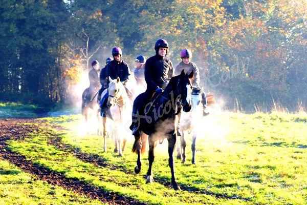 Morning Training in Autumn - Gareth & Pat Phelan's Team