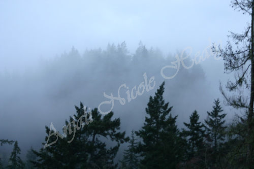 In The Mists