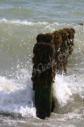 Sea Posts